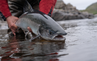 An eager angler hoists a king salmon before releasing it to the water.